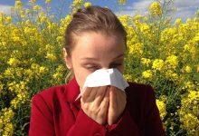 Photo of Uticaj polena ambrozije na zdravlje stanovništva