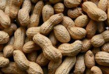 Photo of Kikiriki zdrav, ali treba jesti nesoljeni kikiriki