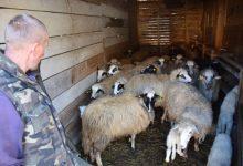 Photo of Muharem Ramović na selo došao sa pet maraka u džepu, danas jedan od najvećih farmera u Goraždu