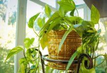 Photo of Poželjno je imati biljke u kući