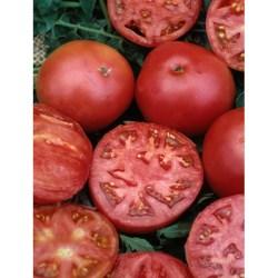 Better Boy tomato