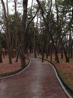 Busan day 4 - Daereungwon Tumuli Park 4