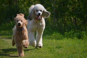Two beloved dogs have a chance at a new life
