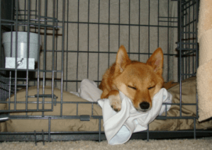 metal dog crate.jpg