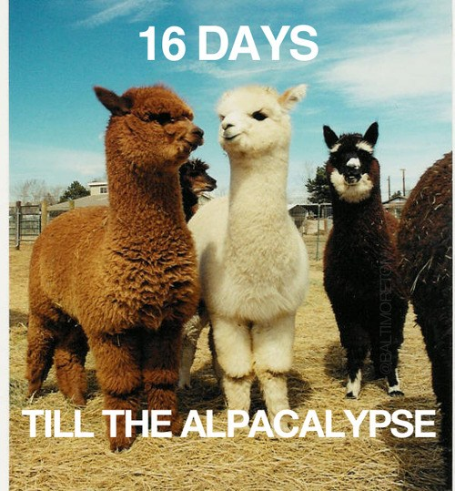 "Picture of alpacas reads ""16 days till the Alpacalypse."""