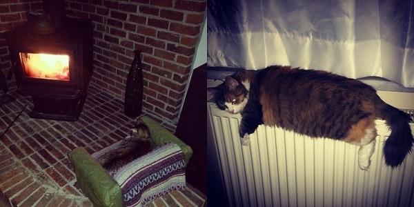 Daracık petek üzerinde ısınmaya çalışmaz, çatır çatır yanan sobanın önünde kıvrılıp uyurduk