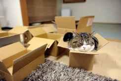 funny-cats-if-it-fits-i-sits-11