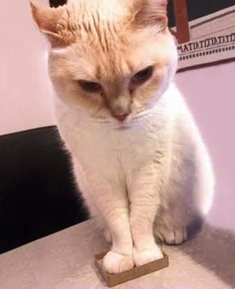 funny-cats-if-it-fits-i-sits-19