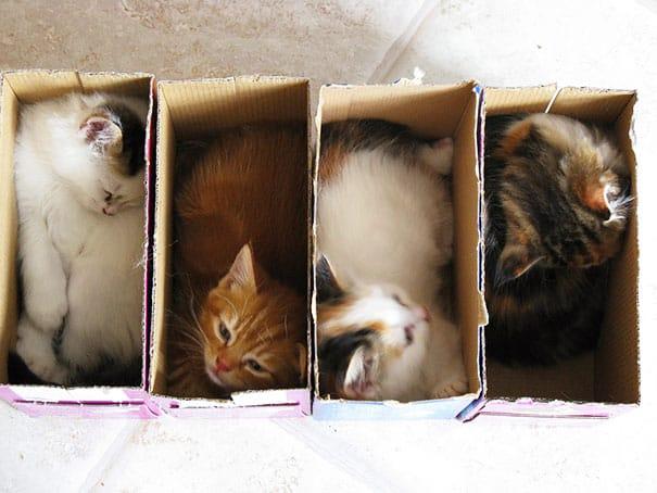 funny cats if it fits i sits 4