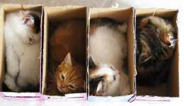 Her yere sığabilen 21 kedi
