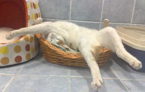 funny-sleeping-cats-10