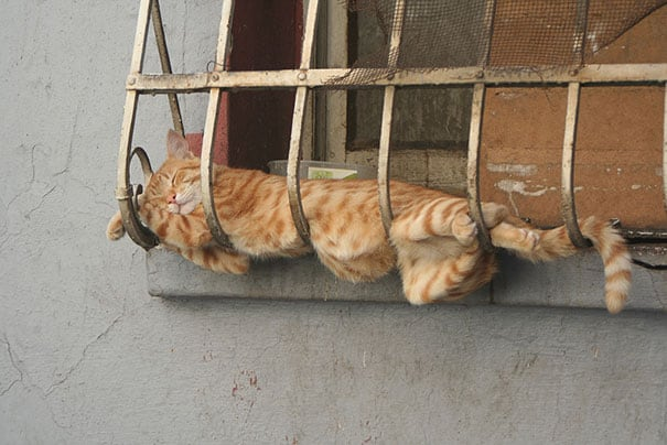 funny sleeping cats 7