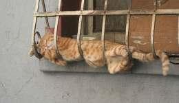 Uyku konusunda sınır tanımayan 30 kedi