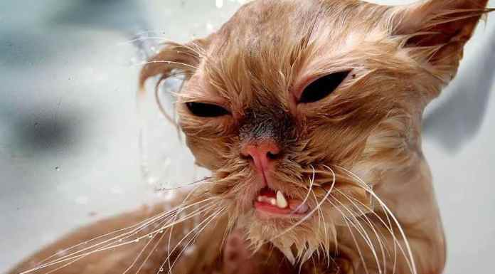 funny-wet-cats-24