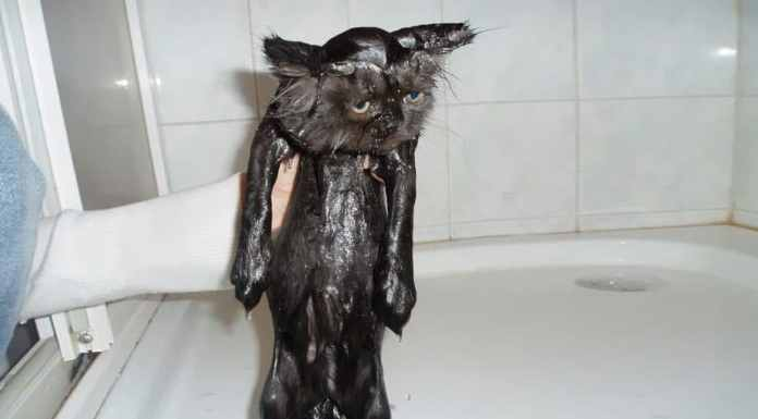 funny-wet-cats-25