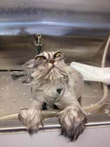 funny-wet-cats-8