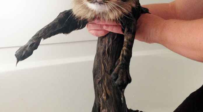 funny-wet-cats-9-2