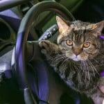 kedi serinletmek 3