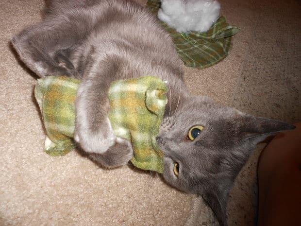 kedi nanesi 3