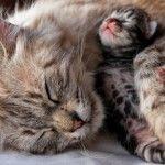 anne kedi 1