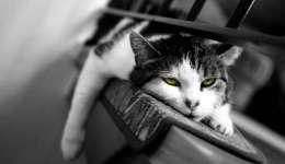Kedinizin sıkılmasını önlemek için 5 öneri