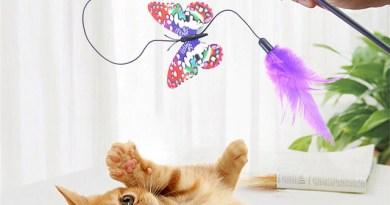 Kedi Oyuncakları nelerdir?