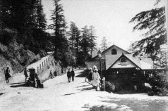 old willow bank_shimla