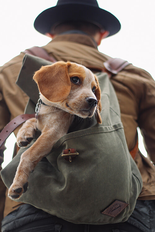 Take your dog with you on an amazing adventure to Gorropu