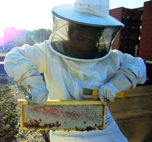 10 Easy Steps to Becoming an Urban Beekeeper Keeping Backyard Bees