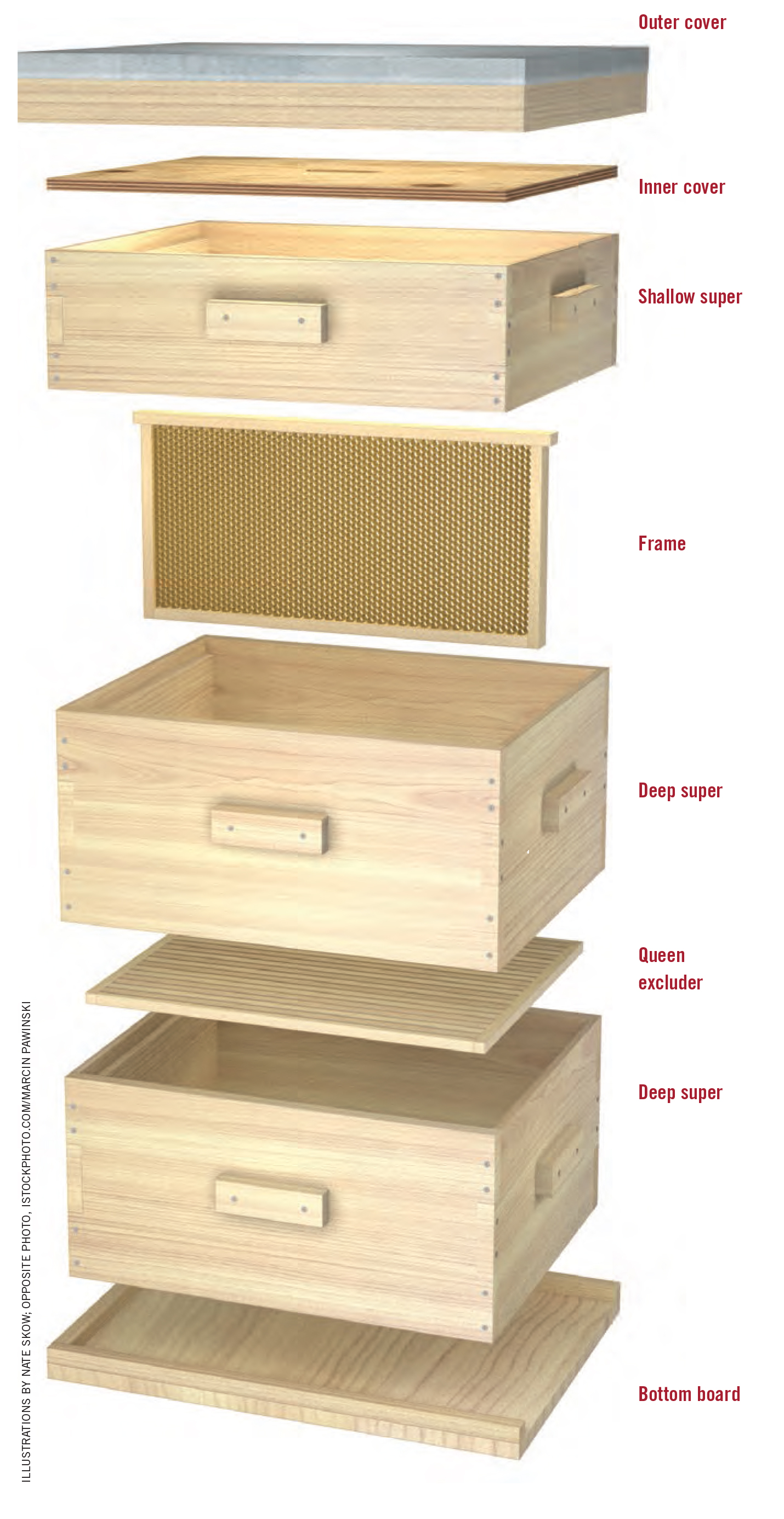 Anatomy of a beehive Keeping Backyard Bees