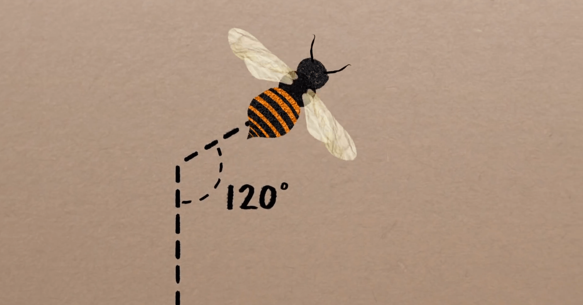 Why Do Bees Build in Hexagons? Keeping Backyard Bees