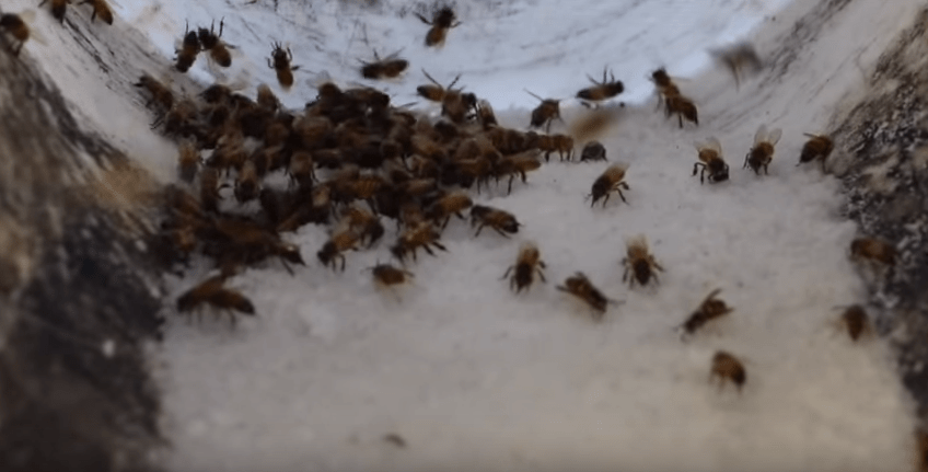 Open Feeding Keeping Backyard Bees