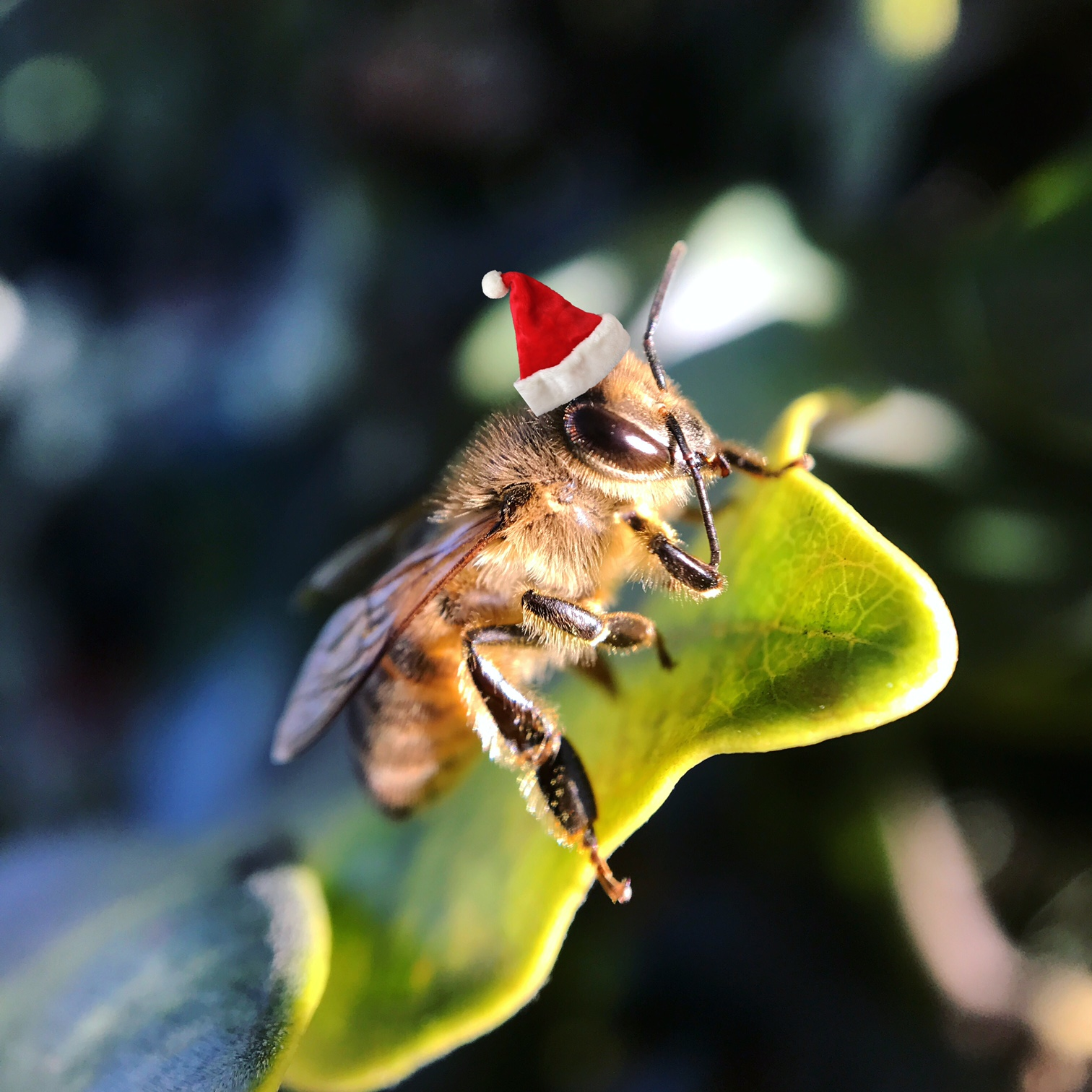 What To Do With That Holiday Beekeeping Kit Keeping Backyard Bees