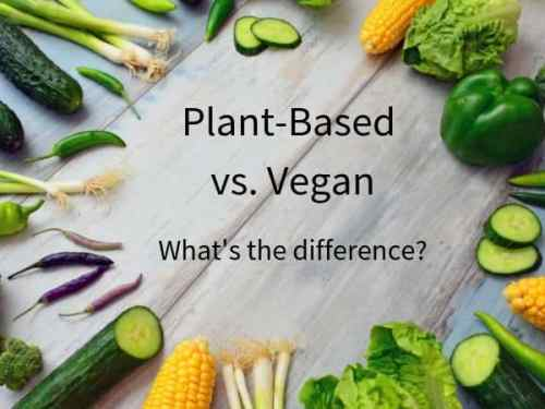 Plant-Based vs. Vegan   What's the difference?
