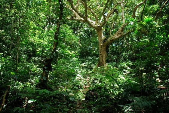熱帶叢林生態原始的紅頭山_臺東縣蘭嶼鄉 - 登山補給站