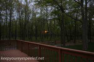 backyard feeder (1 of 1)
