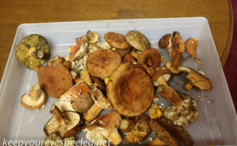 Sorry For The Absence, But So Much To Do In The Summer, And Mushroom Hunting Is One Of Them.