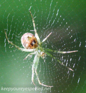 PPL  Wetlands spider (1 of 1)