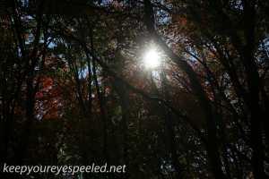 Fall hike (8 of 26)