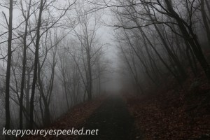 Tresckow hike  (37 of 50)