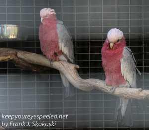 Bonorong birds-10