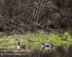 Weatherly railroad Penrose hike birds April 23 2016-3