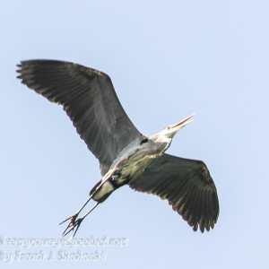 PPL Wetlands wildlife -23