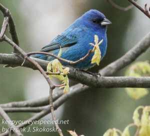 birds feeder -11