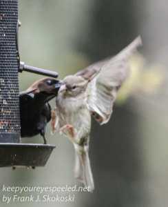 birds feeder -6