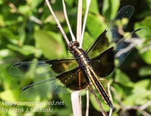 macro dragonfly-30