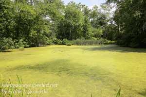 PPL Wetlands -33