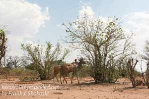 botswana-chobe-safari-landscape-9