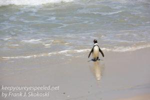 cape-point-penguins-32