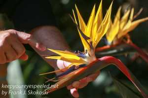 capetown-botanical-gardens-6
